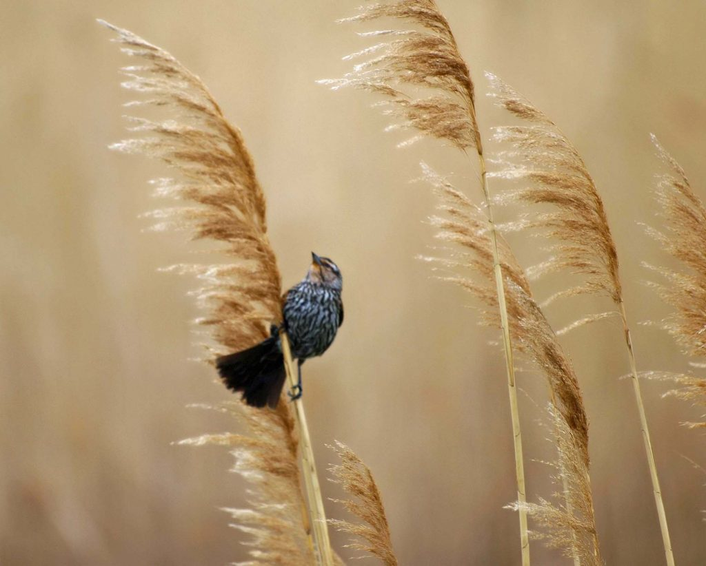 Bird on a Stalk