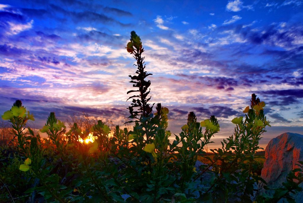 Plants and Sky