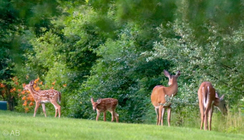 Deer-Maumee Bay