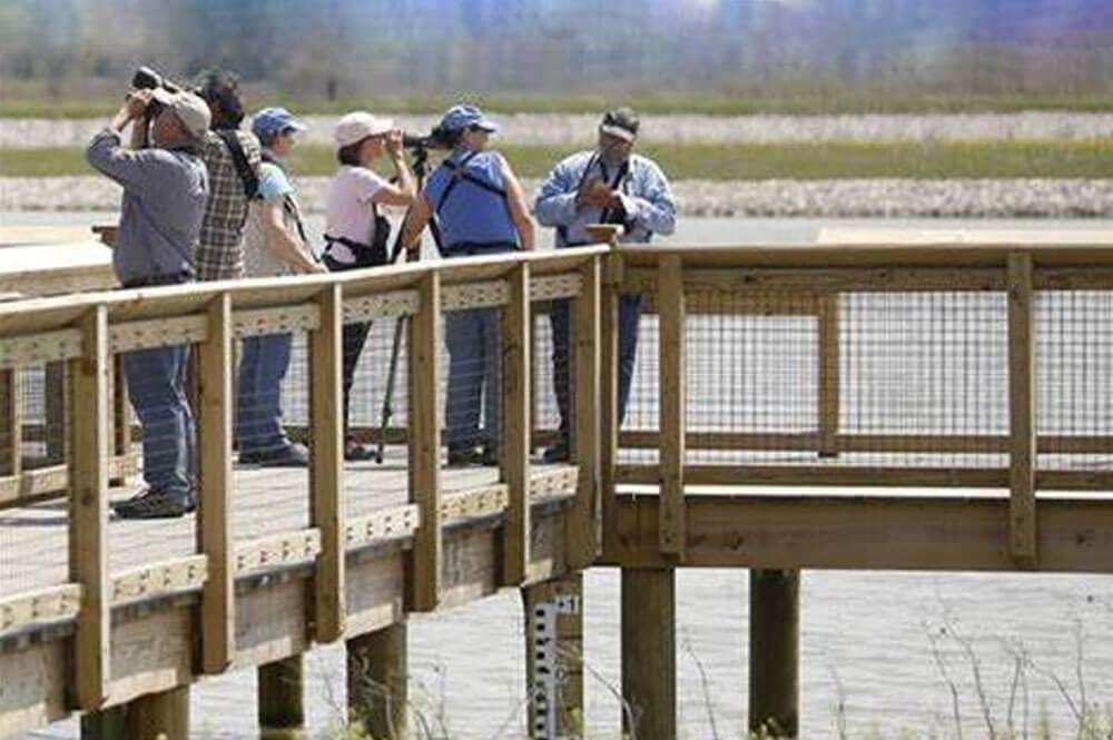 Group birdwatching at Howard Marsh